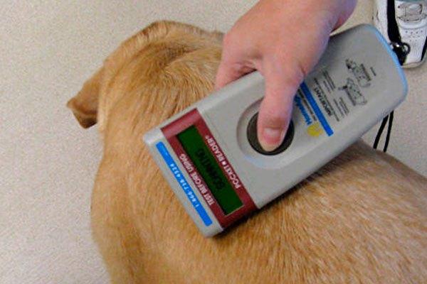 Municipalidad de Aysén llama a dueños de mascotas a inscribirlas en Registro Nacional