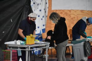 Municipio de Aysén efectuará nuevo operativo de esterilización gratuito para perros y gatos de la comuna