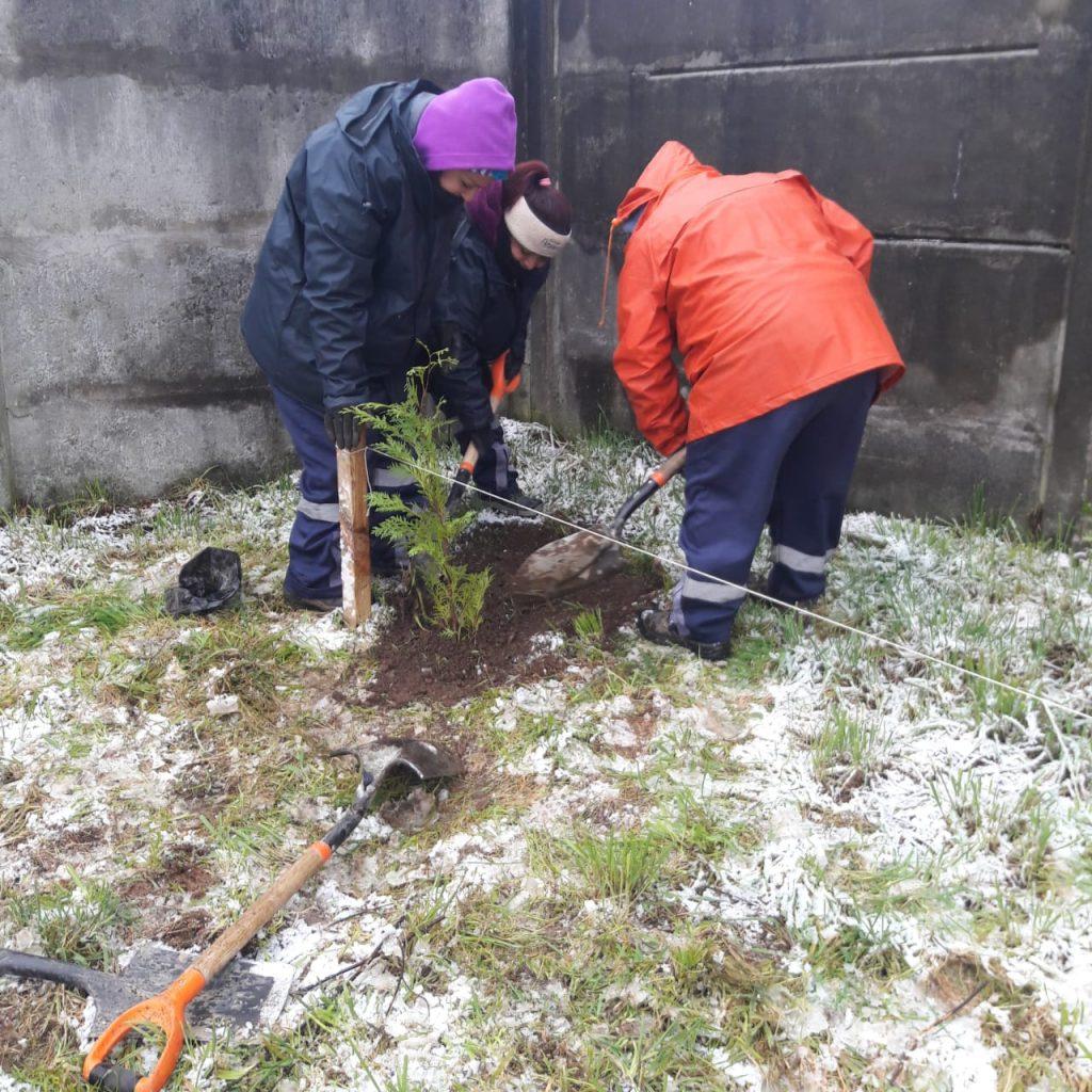 Municipio de Aysén firma convenio de colaboración con CONAF para arborización comunal